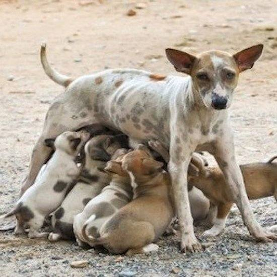 Ruim 10.000 kilo Nederlandse hondenbrokken naar zwerfhonden