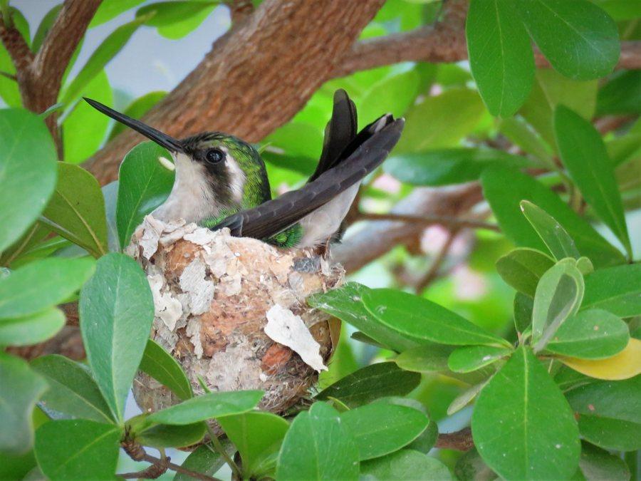 Evenement Bird Watching Cross Island Trip