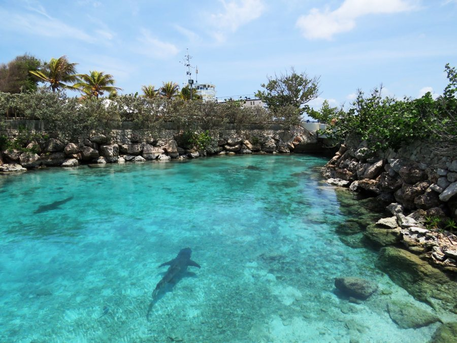 Curaçao Sea Aquarium Park