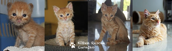 Kitten Rescue Curaçao Foundation