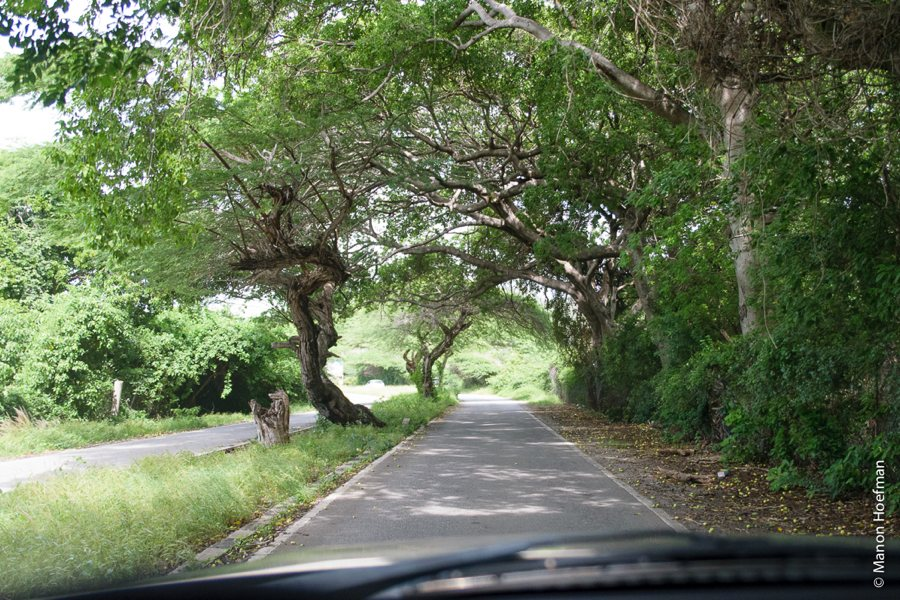 Wandelen op Curacao; Hòfi Pastor