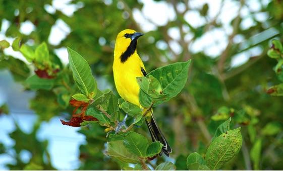 Fauna op Curaçao